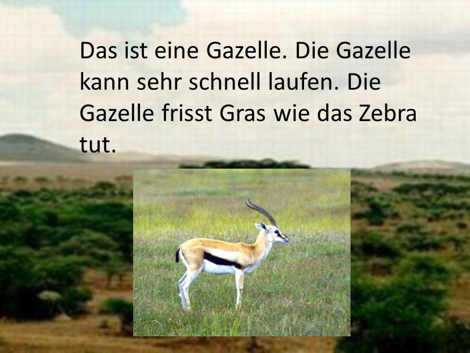 Das ist eine Gazelle. Die Gazelle kann sehr schnell laufen. Die Gazelle frisst Gras wie das Zebra tut.
