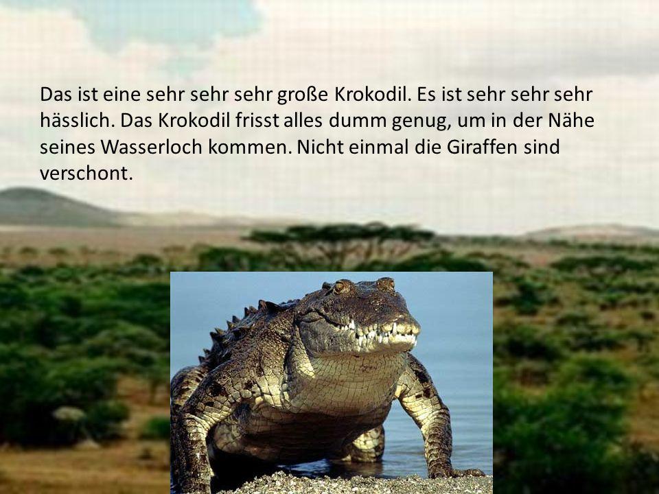 Das ist eine sehr sehr sehr große Krokodil. Es ist sehr sehr sehr hässlich. Das Krokodil frisst alles dumm genug, um in der Nähe seines Wasserloch kom