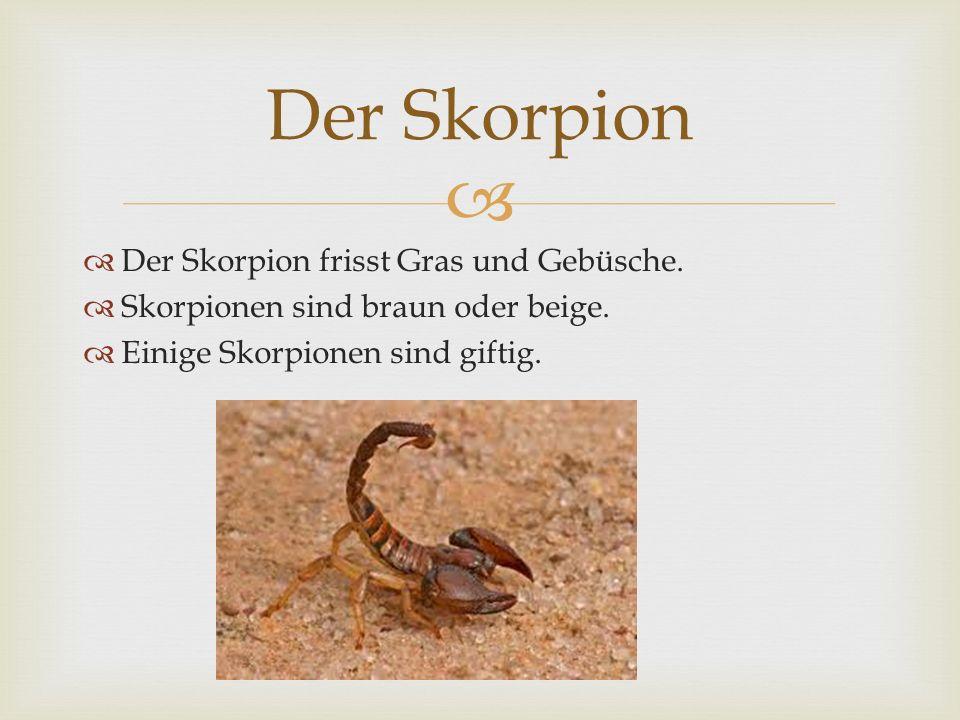 Der Skorpion frisst Gras und Gebüsche. Skorpionen sind braun oder beige. Einige Skorpionen sind giftig. Der Skorpion
