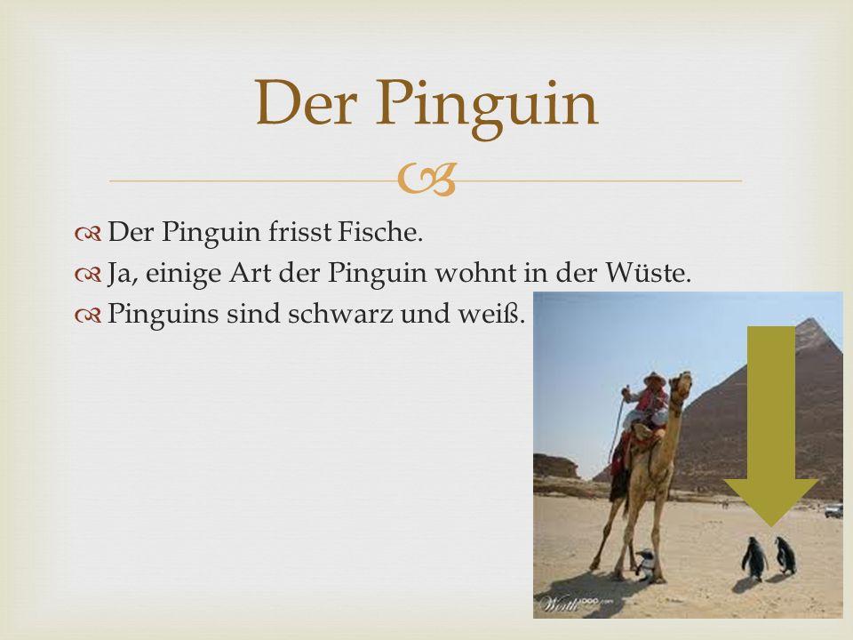 Der Pinguin frisst Fische. Ja, einige Art der Pinguin wohnt in der Wüste. Pinguins sind schwarz und weiß. Der Pinguin