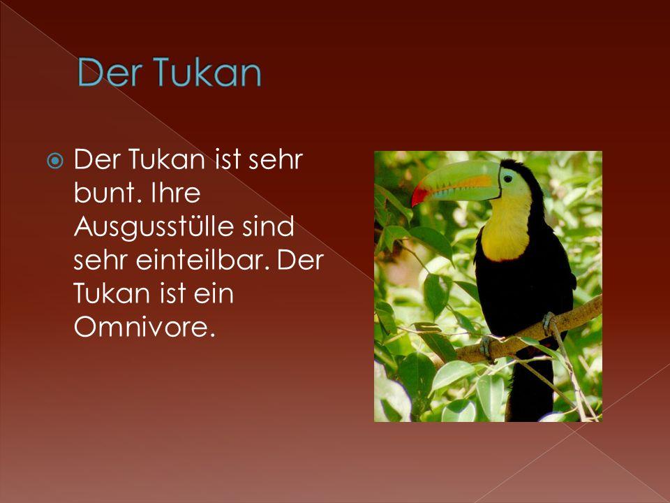 Der Tukan ist sehr bunt. Ihre Ausgusstülle sind sehr einteilbar. Der Tukan ist ein Omnivore.