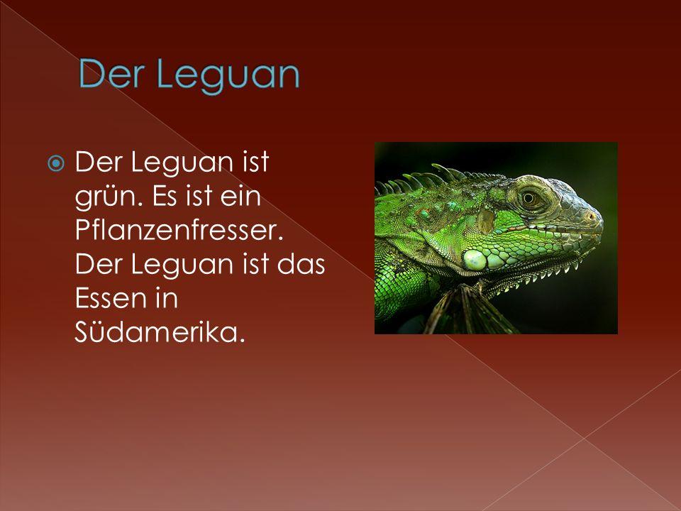 Der Leguan ist grün. Es ist ein Pflanzenfresser. Der Leguan ist das Essen in Südamerika.