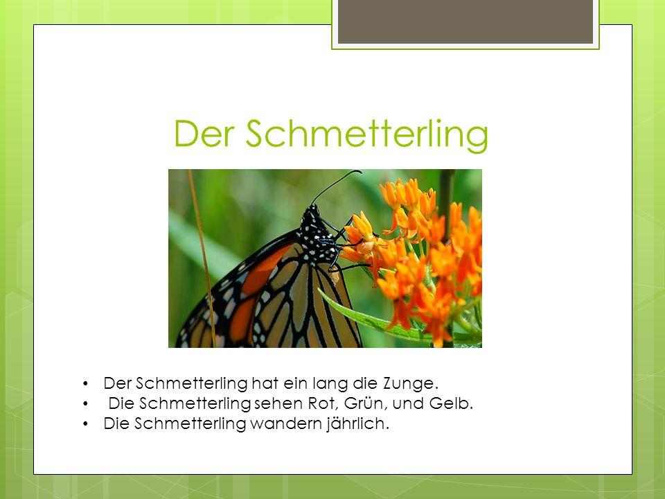 Der Schmetterling Der Schmetterling hat ein lang die Zunge.