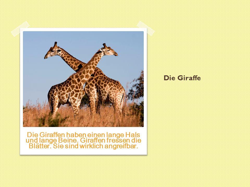 Das Nashorn Die Nashörner haben ein scharf Horn.Sie sind sehr gefährlich und feindlich.