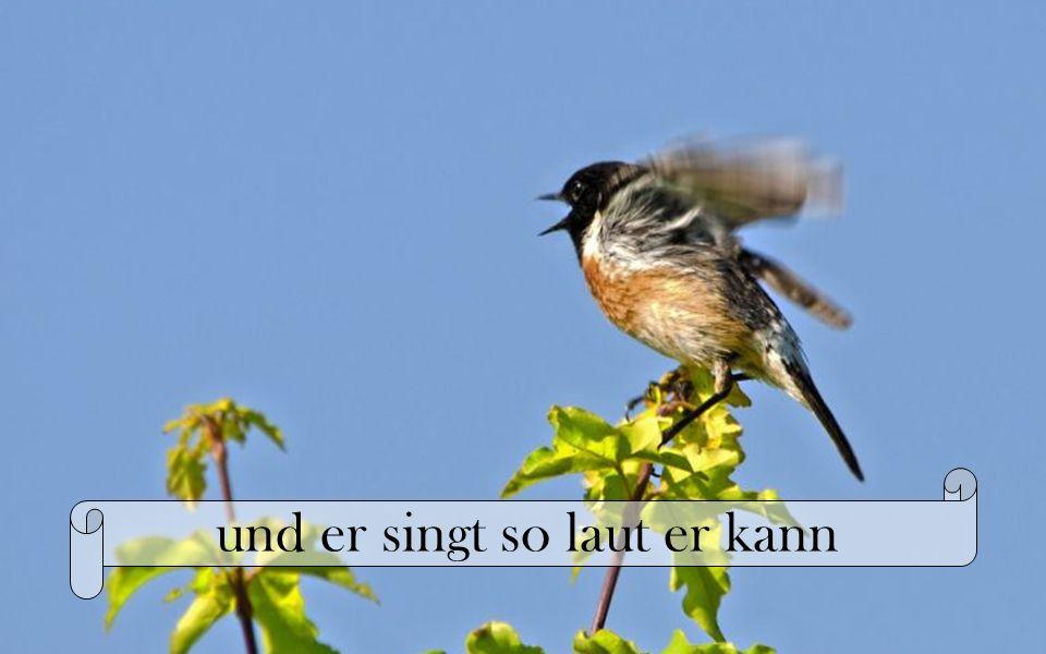 Und im Baum da sitzt ein Vogel