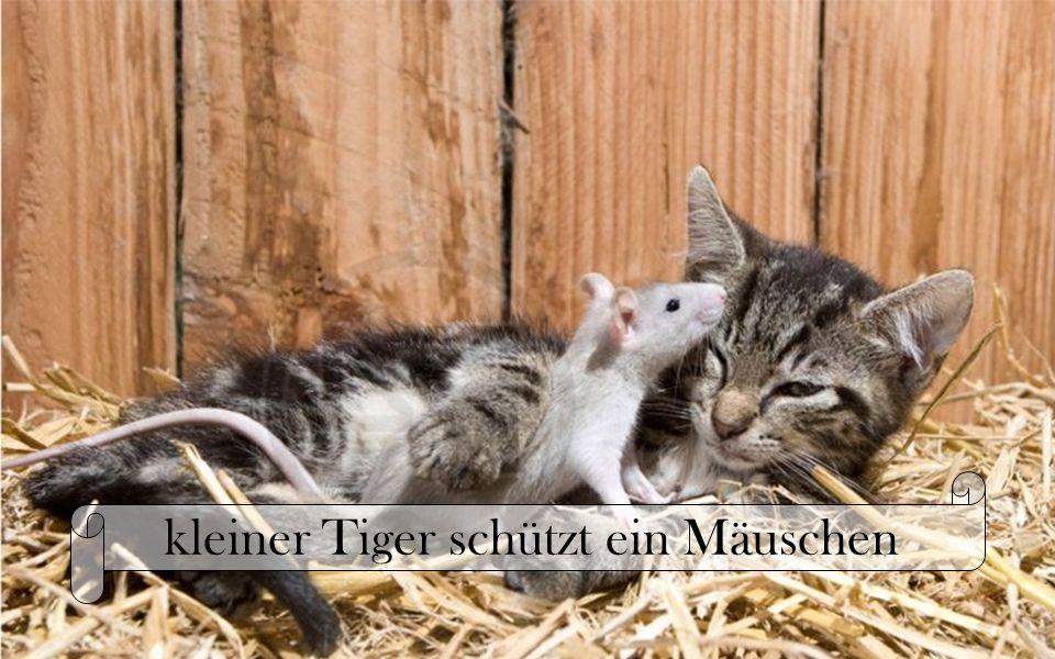kleiner Tiger schützt ein Mäuschen