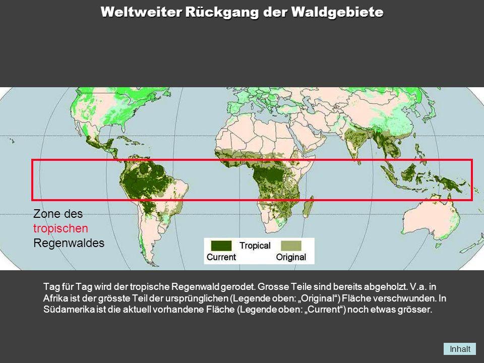 Inhalt Weltweiter Rückgang der Waldgebiete Tag für Tag wird der tropische Regenwald gerodet. Grosse Teile sind bereits abgeholzt. V.a. in Afrika ist d