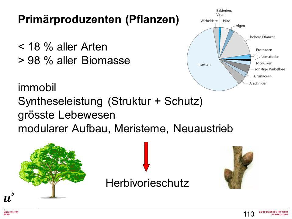 110 Primärproduzenten (Pflanzen) < 18 % aller Arten > 98 % aller Biomasse immobil Syntheseleistung (Struktur + Schutz) grösste Lebewesen modularer Aufbau, Meristeme, Neuaustrieb Herbivorieschutz