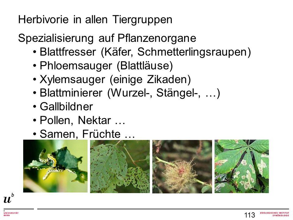 113 Herbivorie in allen Tiergruppen Spezialisierung auf Pflanzenorgane Blattfresser (Käfer, Schmetterlingsraupen) Phloemsauger (Blattläuse) Xylemsauger (einige Zikaden) Blattminierer (Wurzel-, Stängel-, …) Gallbildner Pollen, Nektar … Samen, Früchte …