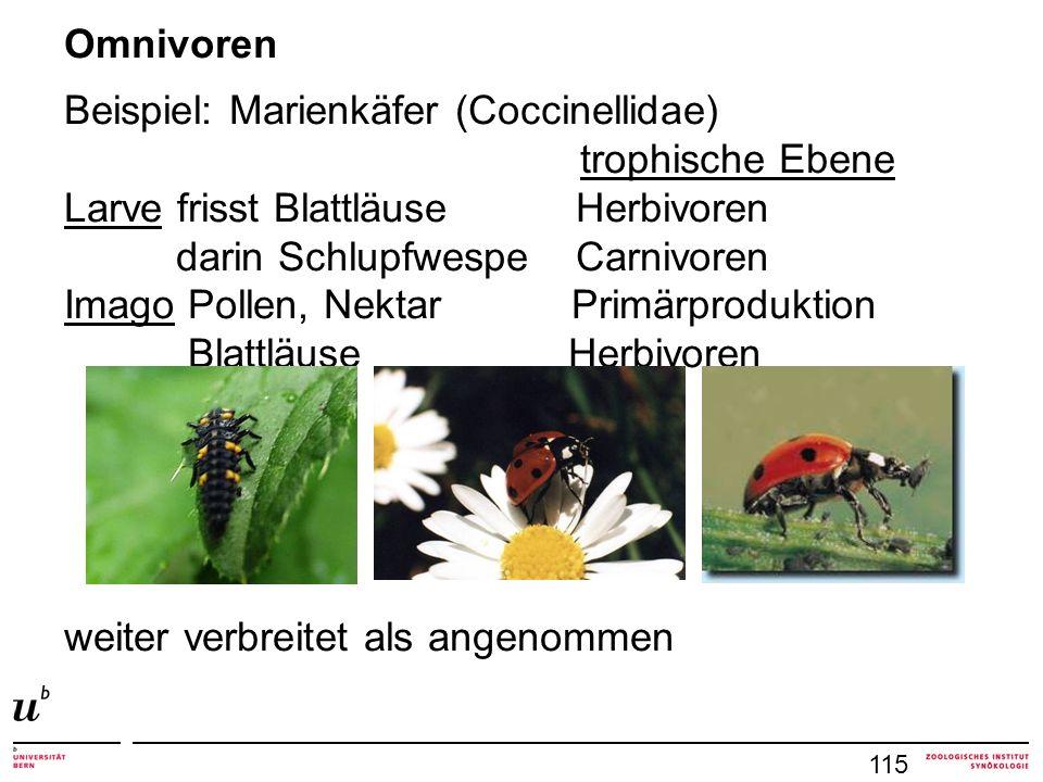 115 Omnivoren Beispiel: Marienkäfer (Coccinellidae) trophische Ebene Larve frisst Blattläuse Herbivoren darin Schlupfwespe Carnivoren Imago Pollen, Nektar Primärproduktion Blattläuse Herbivoren weiter verbreitet als angenommen