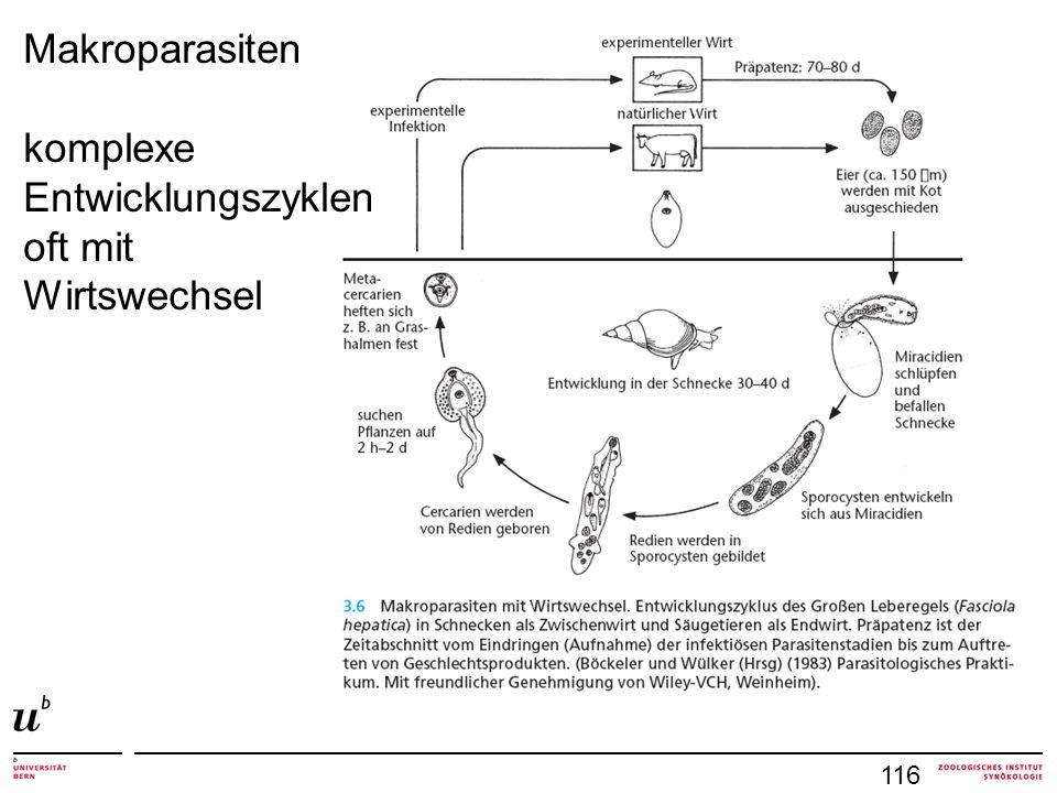 116 Makroparasiten komplexe Entwicklungszyklen oft mit Wirtswechsel