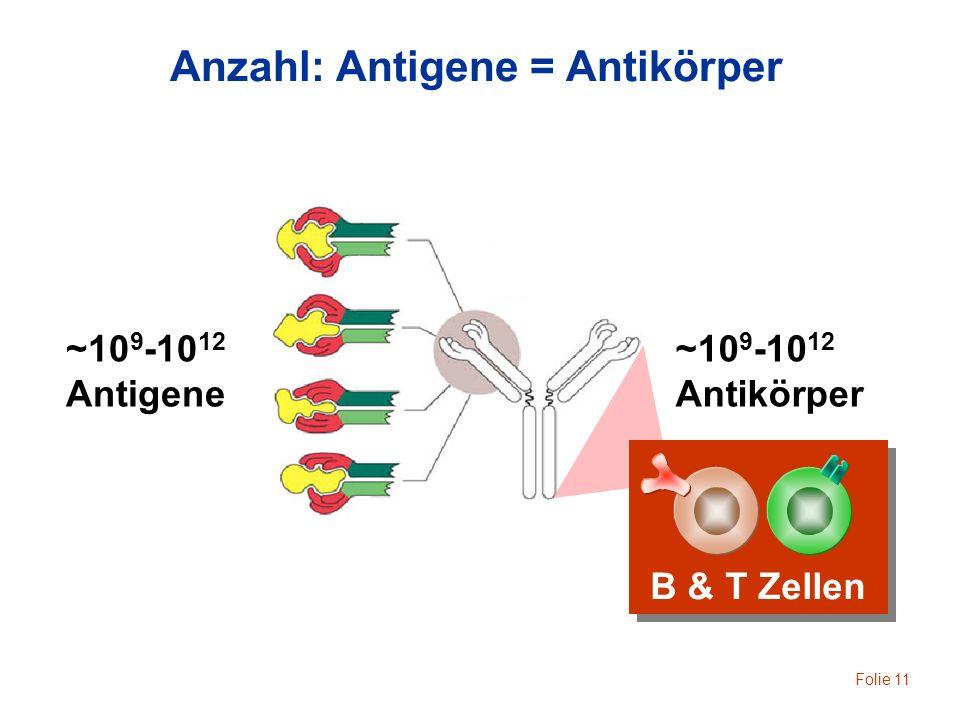 Folie 11 ~10 9 -10 12 Antigene ~10 9 -10 12 Antikörper B & T Zellen Anzahl: Antigene = Antikörper