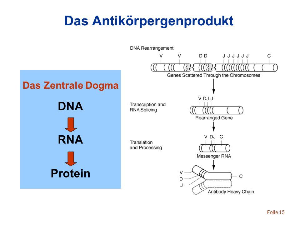 Folie 15 Das Antikörpergenprodukt Das Zentrale Dogma DNA RNA Protein