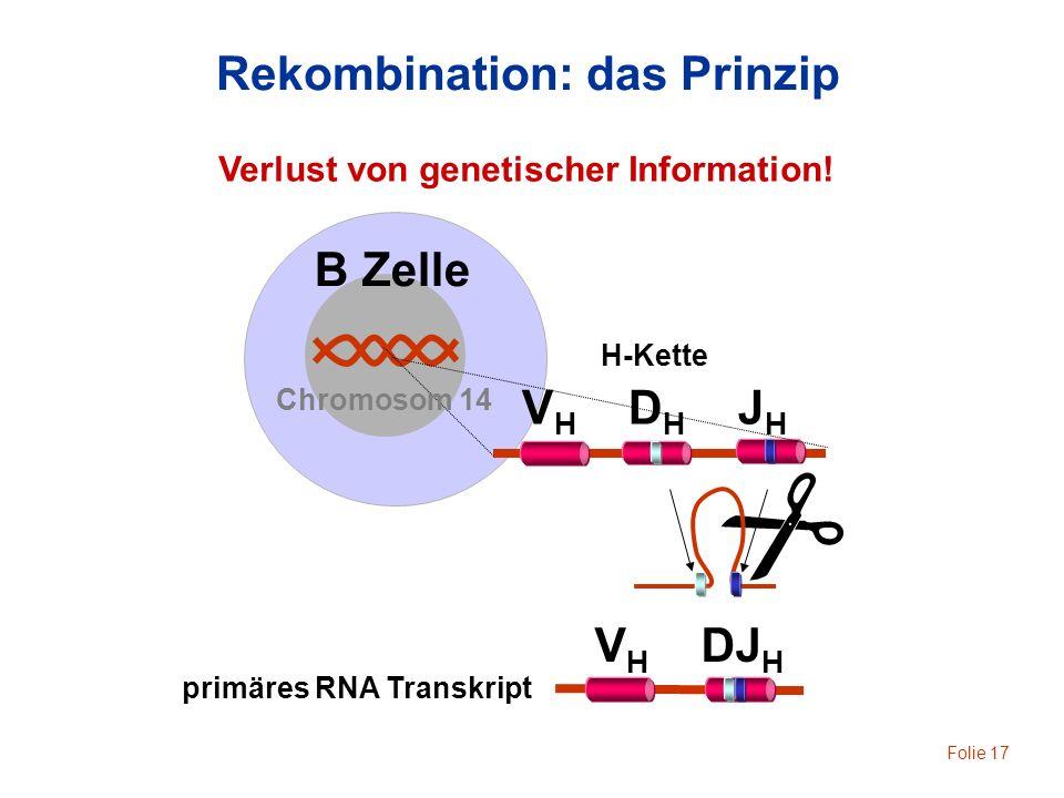 Folie 17 B Zelle V H D H J H H-Kette Rekombination: das Prinzip Chromosom 14 V H DJ H Verlust von genetischer Information! primäres RNA Transkript