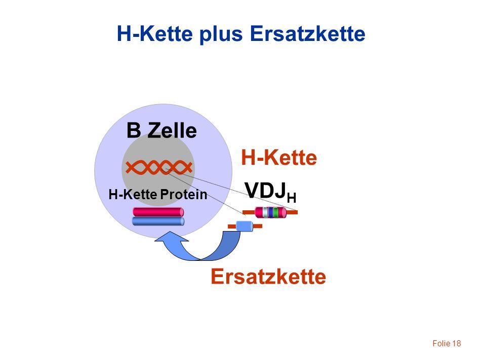 Folie 18 B Zelle H-Kette H-Kette plus Ersatzkette H-Kette Protein VDJ H Ersatzkette