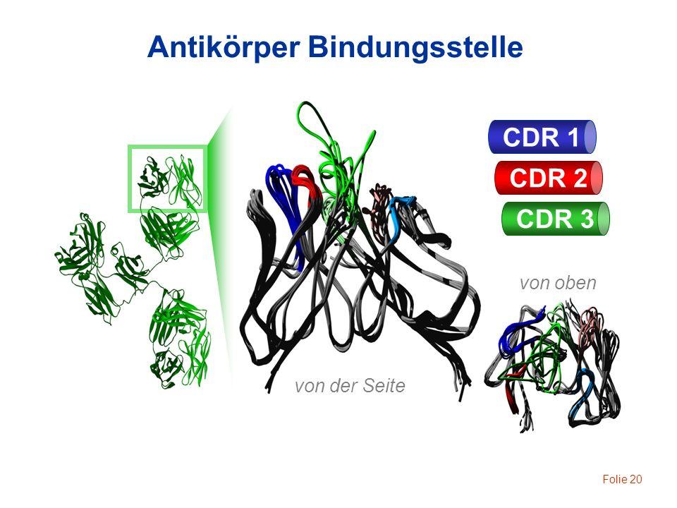 Folie 20 von der Seite von oben CDR 1 CDR 2 CDR 3 Antikörper Bindungsstelle