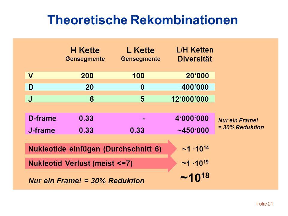 Folie 21 Theoretische Rekombinationen H Kette Gensegmente L/H Ketten Diversität V20020010020000 D200400000 J6512000000 D-frame0.33- Nur ein Frame! = 3