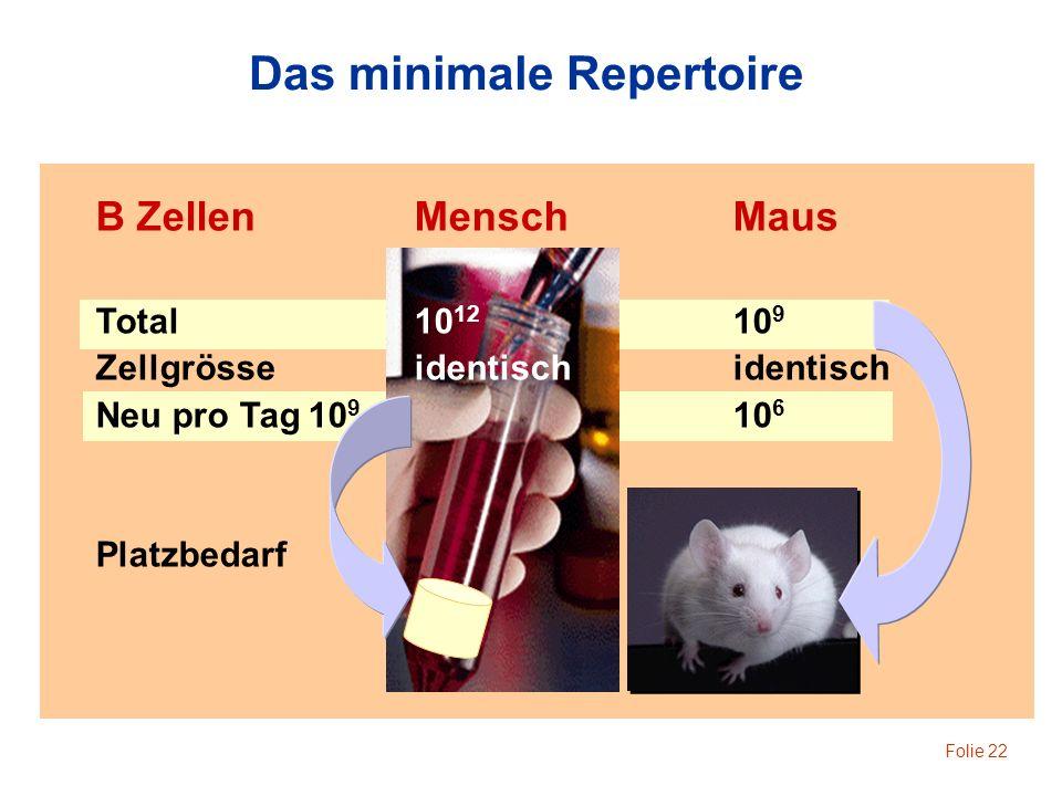 Folie 22 Das minimale Repertoire B ZellenMenschMaus Total10 12 10 9 Zellgrösseidentischidentisch Neu pro Tag10 9 10 6 Platzbedarf