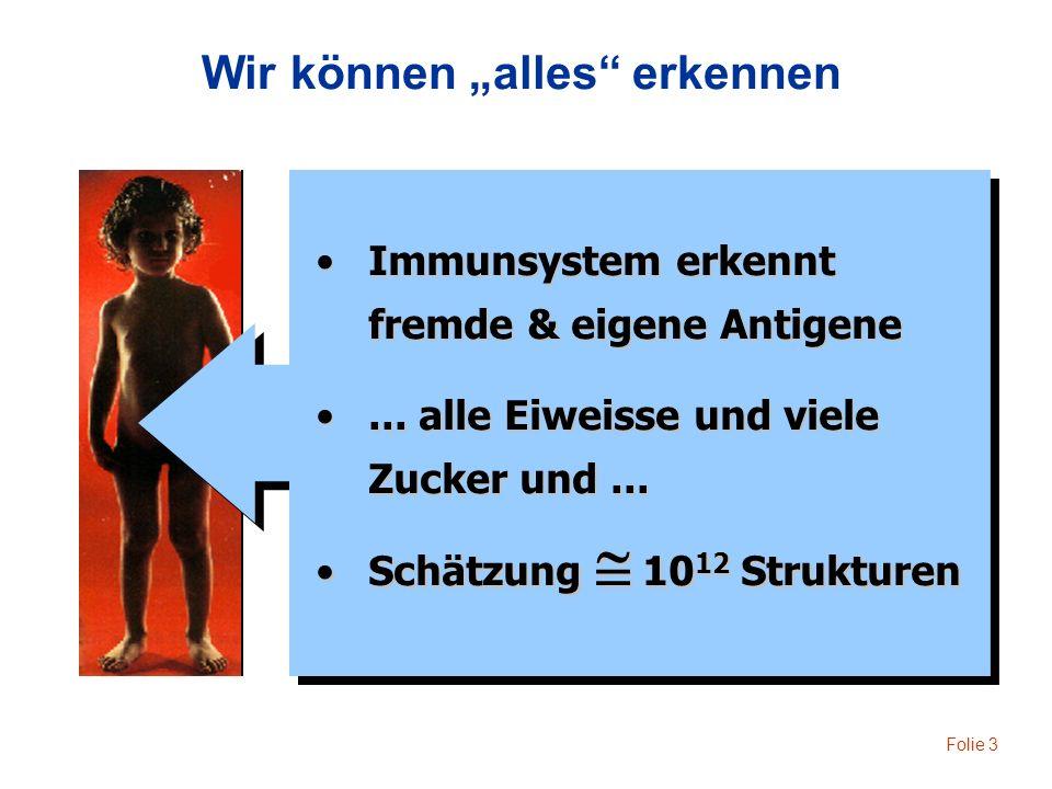 Folie 3 Immunsystem erkennt fremde & eigene AntigeneImmunsystem erkennt fremde & eigene Antigene... alle Eiweisse und viele Zucker und...... alle Eiwe