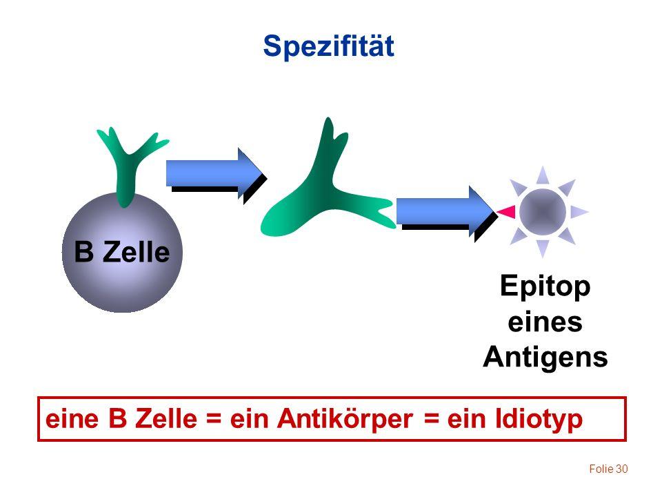 Folie 30 B Zelle Epitop eines Antigens eine B Zelle = ein Antikörper = ein Idiotyp Spezifität