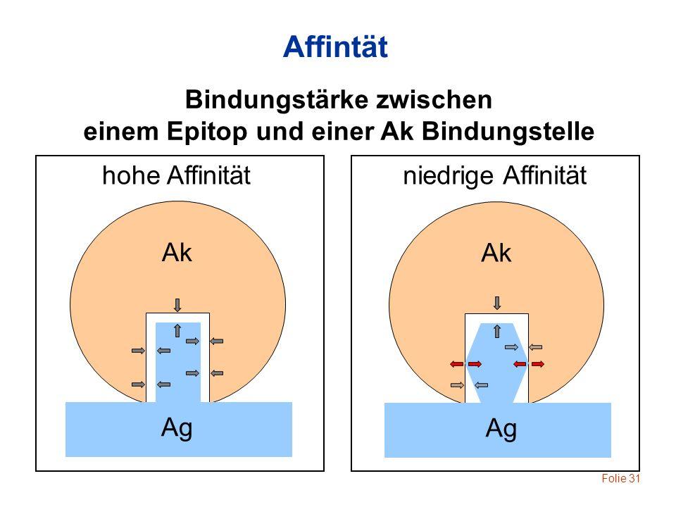 Folie 31 Ak Ag hohe Affinität Ak Ag niedrige Affinität Affintät Bindungstärke zwischen einem Epitop und einer Ak Bindungstelle