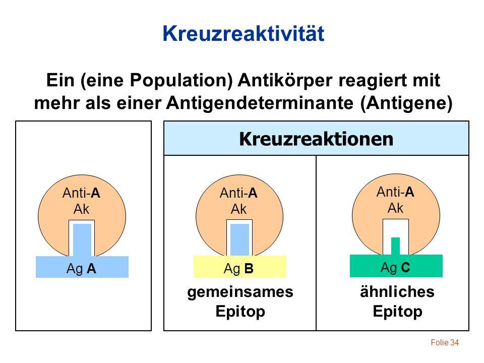 Folie 34 Anti-A Ak Ag A Anti-A Ak Ag B gemeinsames Epitop Anti-A Ak Ag C Kreuzreaktionen Kreuzreaktivität Ein (eine Population) Antikörper reagiert mi