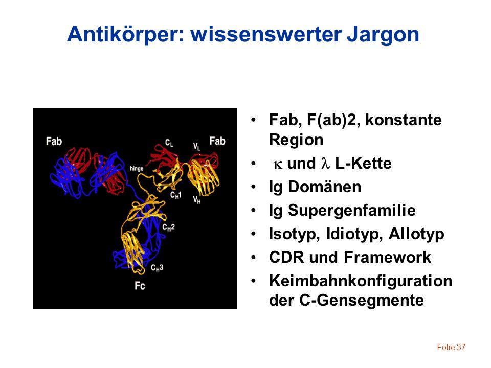 Folie 37 Antikörper: wissenswerter Jargon Fab, F(ab)2, konstante Region und L-Kette Ig Domänen Ig Supergenfamilie Isotyp, Idiotyp, Allotyp CDR und Fra