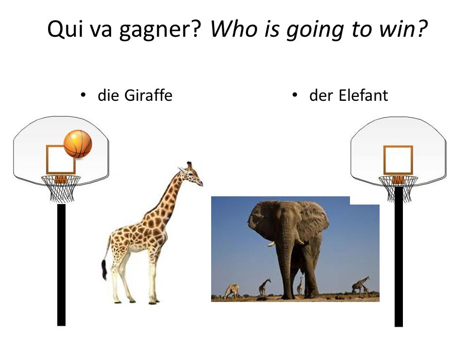 die Giraffe der Elefant Qui va gagner? Who is going to win?
