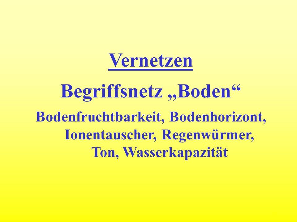 13 Vernetzen Begriffsnetz Boden Bodenfruchtbarkeit, Bodenhorizont, Ionentauscher, Regenwürmer, Ton, Wasserkapazität