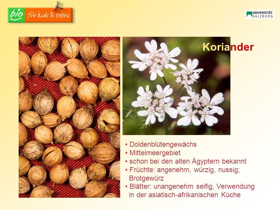 Koriander Doldenblütengewächs Mittelmeergebiet schon bei den alten Ägyptern bekannt Früchte: angenehm, würzig, nussig; Brotgewürz Blätter: unangenehm