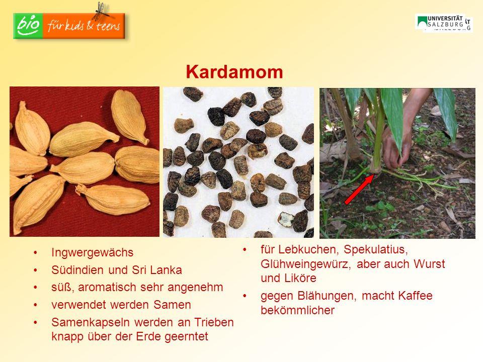Kardamom Ingwergewächs Südindien und Sri Lanka süß, aromatisch sehr angenehm verwendet werden Samen Samenkapseln werden an Trieben knapp über der Erde