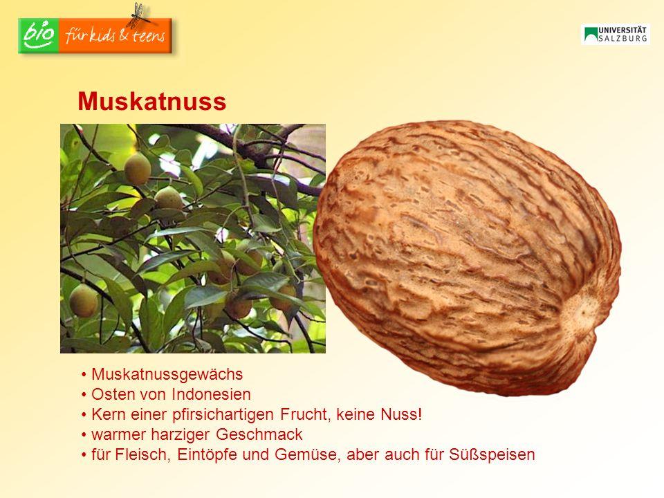 Muskatnussgewächs Osten von Indonesien Kern einer pfirsichartigen Frucht, keine Nuss! warmer harziger Geschmack für Fleisch, Eintöpfe und Gemüse, aber