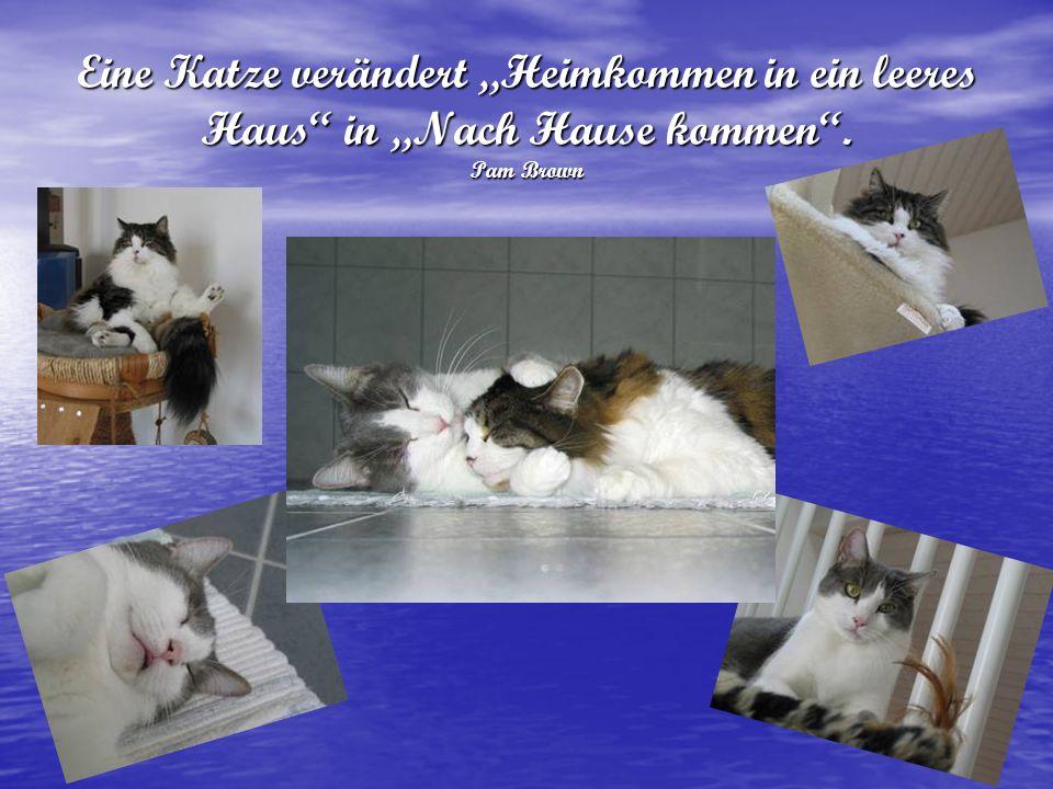 Eine Katze verändert Heimkommen in ein leeres Haus in Nach Hause kommen. Pam Brown