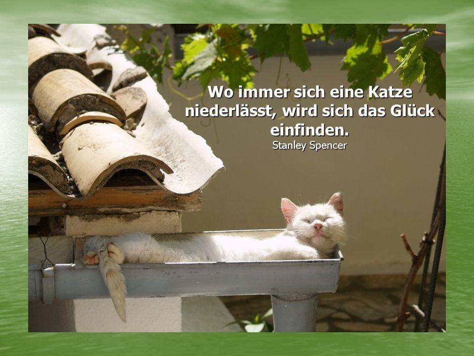 Wo immer sich eine Katze niederlässt, wird sich das Glück einfinden. Stanley Spencer