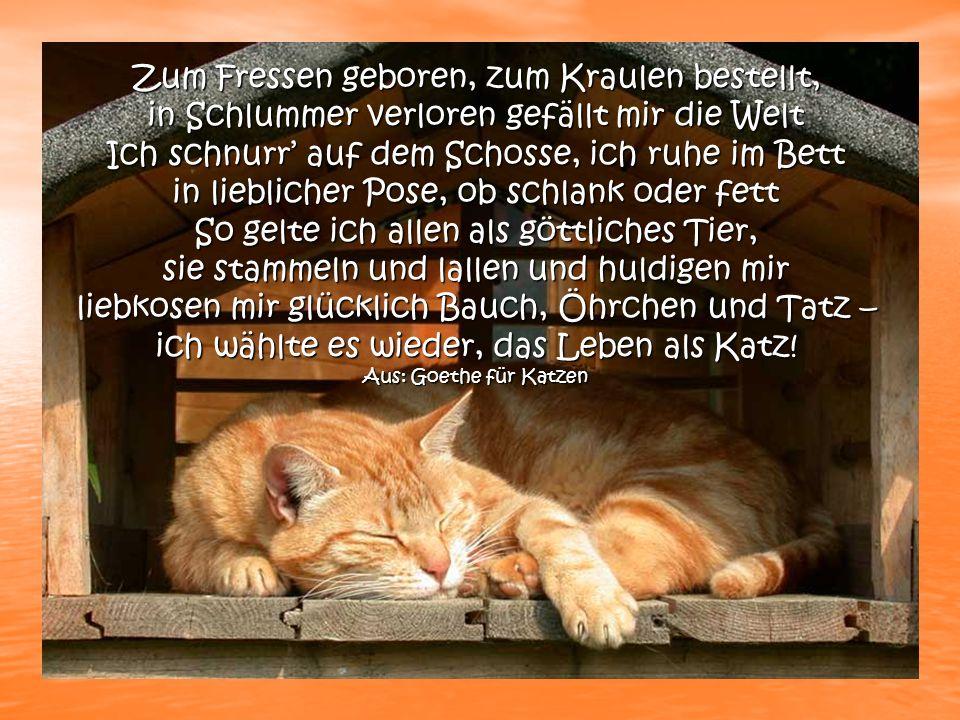 Zitate Katzen Schöne Zitate über Das Leben