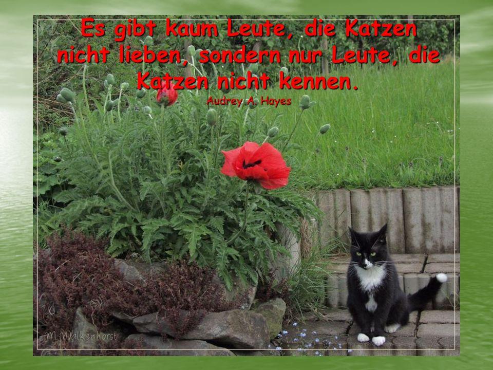 Es gibt kaum Leute, die Katzen nicht lieben, sondern nur Leute, die Katzen nicht kennen. Audrey A. Hayes