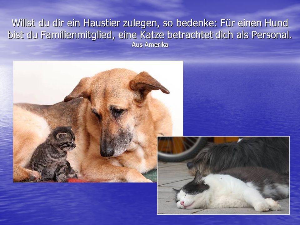 Willst du dir ein Haustier zulegen, so bedenke: Für einen Hund bist du Familienmitglied, eine Katze betrachtet dich als Personal. Aus Amerika