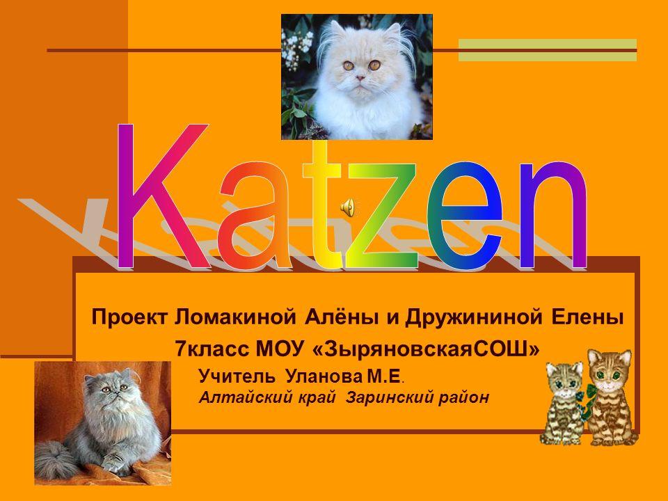 Hauskatzen können 14 bis 16 Jahre alt werden.