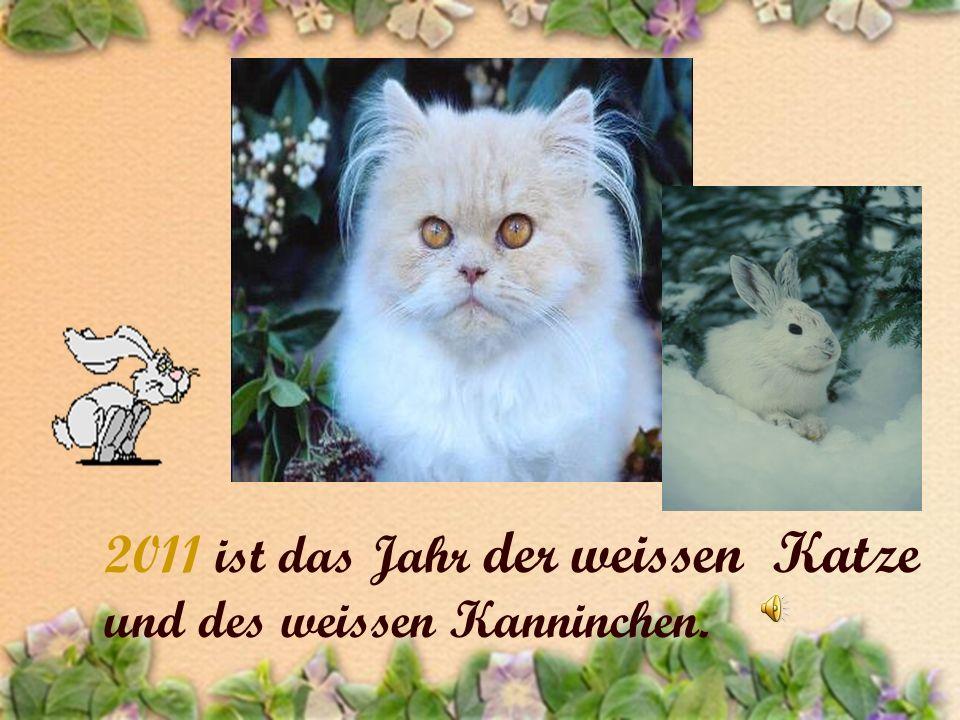 2011 ist das Jahr der weissen Katze und des weissen Kanninchen.