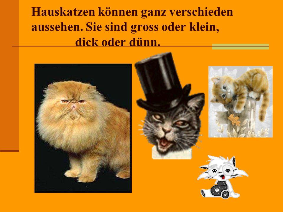 Hauskatzen können ganz verschieden aussehen. Sie sind gross oder klein, dick oder dünn.