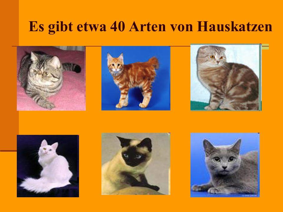 Es gibt etwa 40 Arten von Hauskatzen