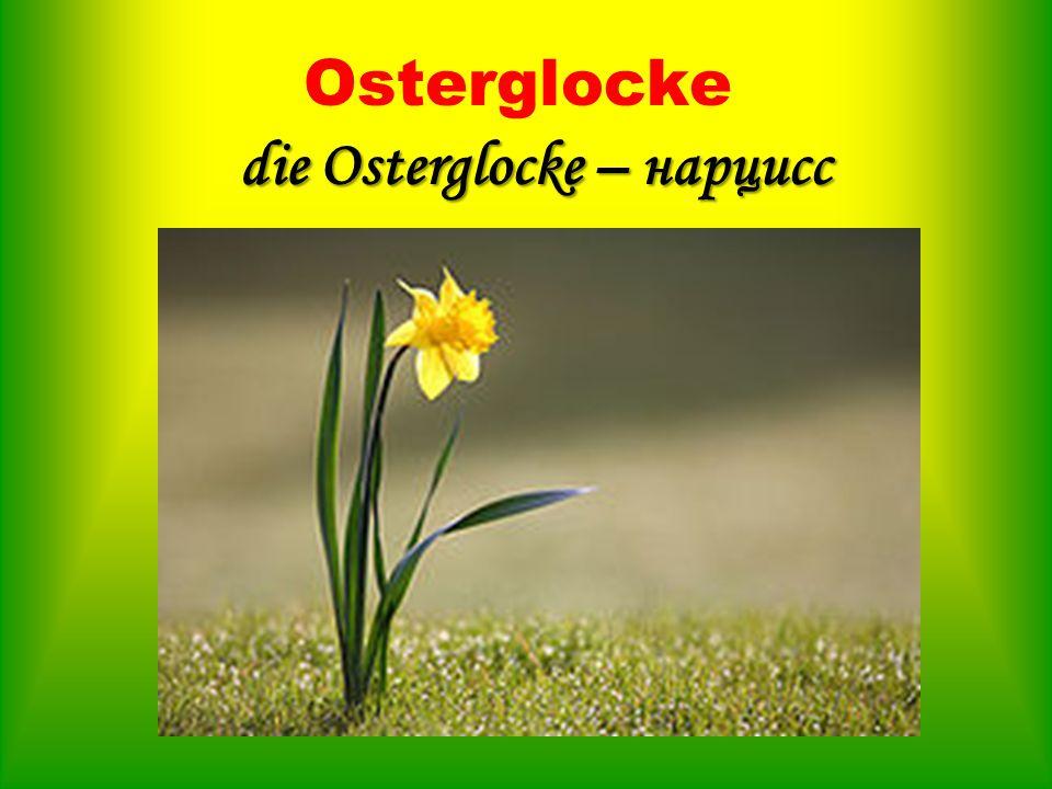 Osterglocke die Osterglocke – нарцисс
