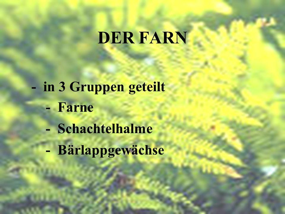DER FARN - Teil der Krautschicht - Feuchte und Schattige Umgebung - Ungeschlechtliche Fortpflanzung - durch Sporen