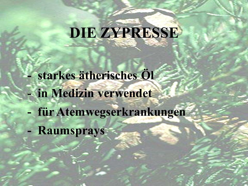 DIE ZYPRESSE - gab Zypern den Namen - gilt als Trauerbaum - sempervirens = immergrün - Baum bis zu 46m hoch