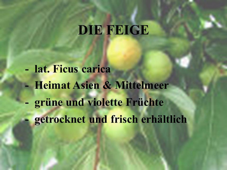 DER EFEU - beliebte Kletterpflanze - schädigt Fassade nicht - immergrün - Vork. Mittel-, Süd- & Westeuropa