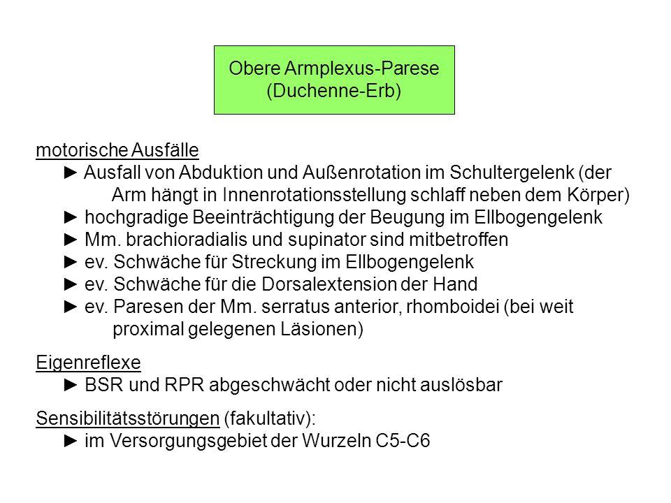 Läsionen des Plexus sacralis Klinisches Bild motorische Ausfälle Parese der für Streckung und Abduktion im Hüftgelenk verantwort- lichen Muskeln weitgehender Ausfall der Beugung im Kniegelenk kompletter Ausfall aller motorischer Funktionen im Bereich des Sprunggelenks und der Zehen Eigenreflexe ASR abgeschwächt oder nicht auslösbar Sensibilitätsstörungen u.a.