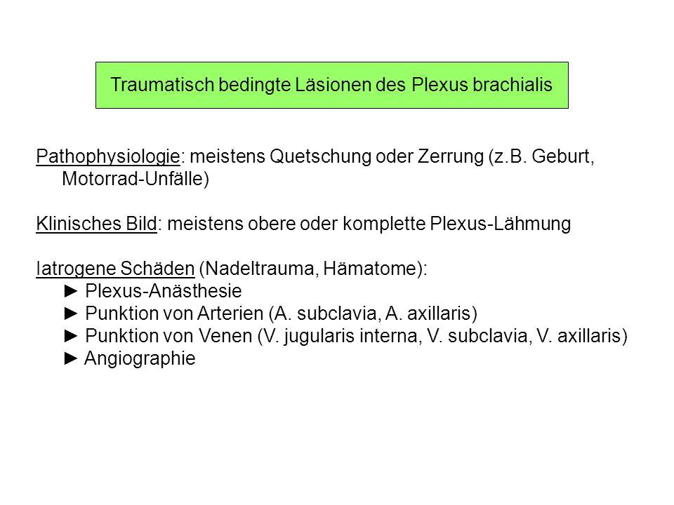 Traumatisch bedingte Läsionen des Plexus brachialis Pathophysiologie: meistens Quetschung oder Zerrung (z.B. Geburt, Motorrad-Unfälle) Klinisches Bild