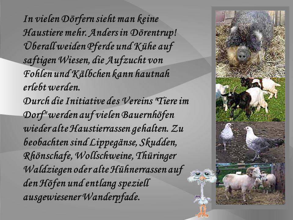 Tiere im Dorf e.V.