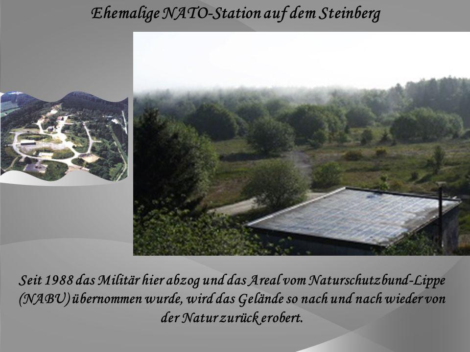 Die Anlage wurde vermutlich bereits im 11.Jahrhundert als Wohnburg aus Holz erbaut.