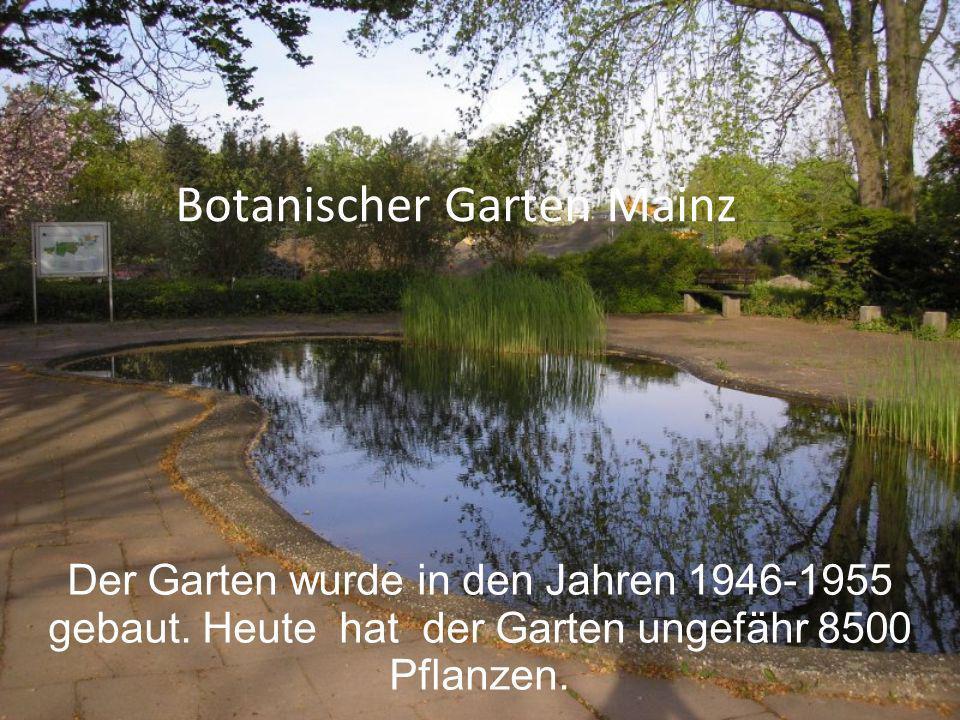 Botanischer Garten Mainz Der Garten wurde in den Jahren 1946-1955 gebaut. Heute hat der Garten ungefähr 8500 Pflanzen.